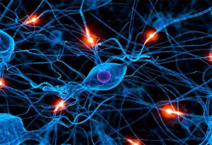 Sistema Nervoso - O que é?