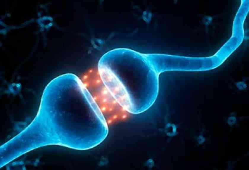 Controle Nervoso do Coração - Fisiologia Humana